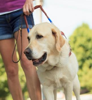 Balance Disorder Service Dog