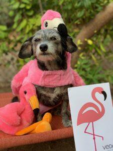"""""""Pixie"""" with Fiona Flamingo"""